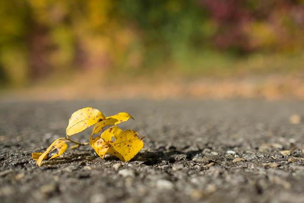 Gelbes Laub - mit Fuji XF 1,4/23 mm