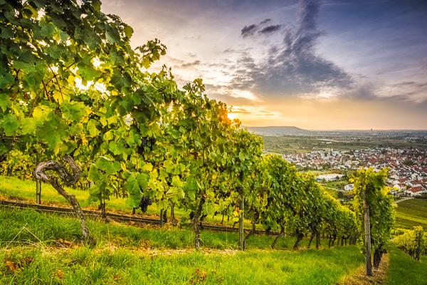 Sonnenuntergang am Weinberg bei Beutelsbach
