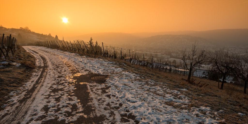 Weinberg im Winter mit Sonnenstern