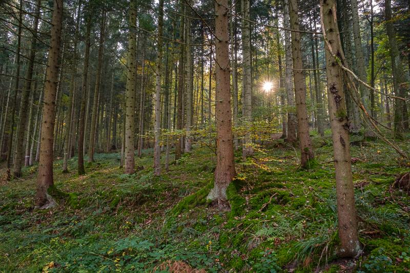 Landschaftsbilder - Nadelwald
