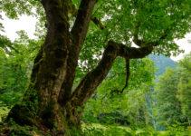 Im Wald fotografieren