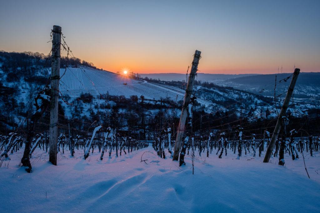Sonnenaufgang im Weinberg Winter Schnee