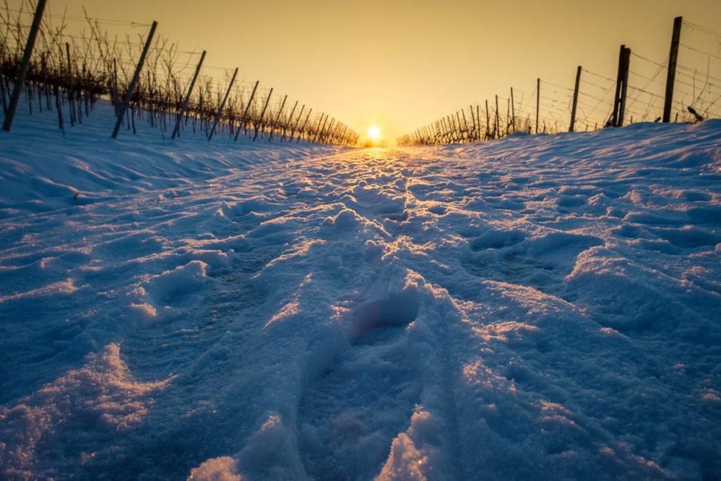 Weinberg im Winter und Sonnenaufgang