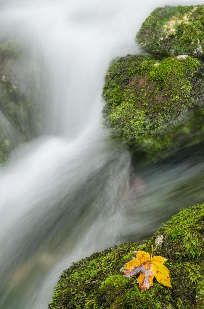 Quelle bei Ramsau in Bayern