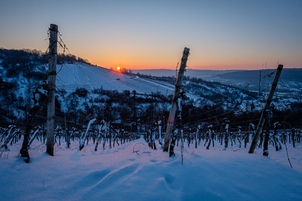 Weinberg im Januar - Winter